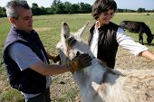 stock photo of farmworker  - A man and a smiling woman with a donkey - JPG