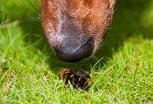 Neugierig Hund schnüffeln pelzigen Wurm Closeup