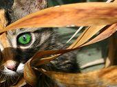 Olho de gatinho