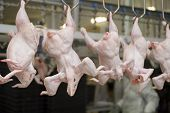 stock photo of slaughterhouse  - Continuous conveyor of meat of chickens - JPG