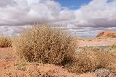 Tumble weeds in Arizona