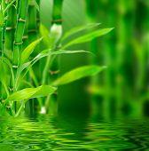 Bambu fresco