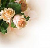 Beautiful Roses border.Sepia toned