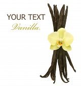 Beautiful Vanilla beans and flower