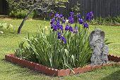 Angel Among Beautiful Blue Irises