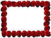 Red Rose Frame