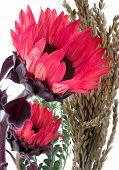 Red Sunflowers