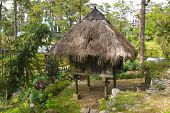 Palm Thatched Hut In A Jungle