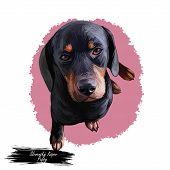 Slovensky Kopov Slovak Pet Wearing Collar On Neck Digital Art. Watercolor Portrait Closeup Of Domest poster