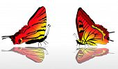 illustration with two red and yellow butterflies
