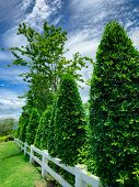 White Fence With Trimmed Tree And Blue Sky And Clouds. Fence Of Resort. Decorative Plant. Beautiful  poster