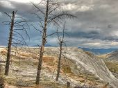 Yellowstone Mammoth Hot Springs - Minerva Terraces in Wyoming, USA