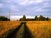 Dirt Road In The Field At Sunset Summer Evening. The Tall, Untrimmed Grass Was Bright Yellow In The poster