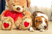 A Large Brown Teddy Bear Is Sitting On The Floor With A Beagle Hound Mix Breed Dog. The Bear Gently  poster
