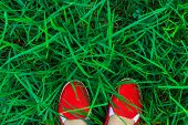 Young Woman In Bright Red Canvas Shoes Stands On Fresh Green Grass Field Meadow Top View Shot. Natur poster
