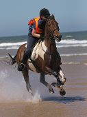 Gallop On The Beach