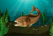 Freshwater fish in underwater habitat