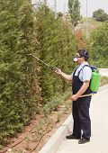 stock photo of pest control  - Man is spraying insects- pest control wearing uniform