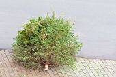 Traditional Green Christmas Tree Fir On Street Bottom After Xmas. The X-mas Tree Is Waiting For Garb poster