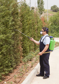 foto of pest control  - Man is spraying insects- pest control wearing uniform ** Note: Slight blurriness, best at smaller sizes - JPG