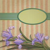 Blueflag Floral Frame