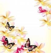 stock photo of gardenia  - Pink gardenia flowers and butterflies on white background for design - JPG