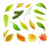 Leaf collection, bitmap copy