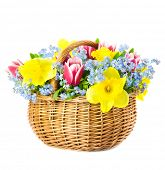 Beautiful Bouquet of  Spring Flowers into Basket / isolated on white background