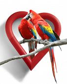 picture of caw  - A couple of kissing parrots with a heart - JPG