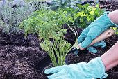 image of rich soil  - A gardener - JPG