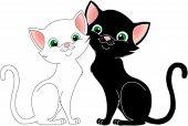 Blackcat_whitecat