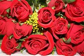 Red Love Roses