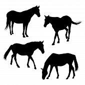 Horses Silhouettes Set 2