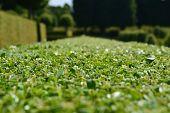 Barokgarden
