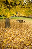Rest Area Picnic Table Autumn Nature Season Leaves Falling