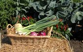 Onion Vegetable Basket