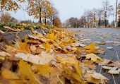 Autumn in the city: Defoliation time