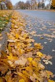 Golden Fall : Defoliation time