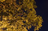 Tree In Nights