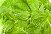 foto of water cabbage  - Wet Lettuce Salad Isolated Surface Top View Close up - JPG
