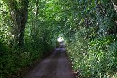 Green Country Lane