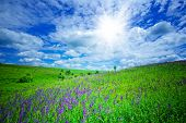 image of wildflowers  - Wildflowers natural habitat in the blue sky background