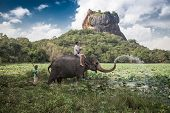 SIGIRIYA, SRI LANKA - 28 FEBRUARY 2014: Man and child riding on the back of elephant with rock of Si
