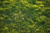 Beautiful Green Grass Background Texture