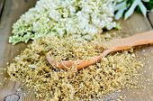 picture of meadowsweet  - Wooden spoon with dried flowers of meadowsweet a bouquet of fresh flowers of meadowsweet on a wooden board