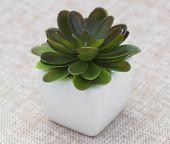 Small Decorative Plant
