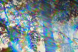 image of prism  - Light rays spectrum colors and tree branches on a sunny day - JPG