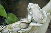 Frog On the Edge