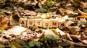 Autumn Background And Concept