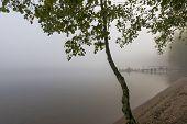 Morning Scene In Autumn